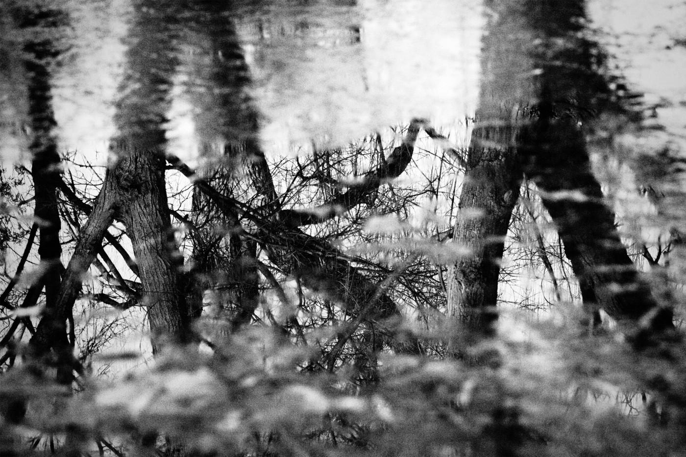 Sonja Ng, </span><span><em>Reflection</em>, </span><span>2016