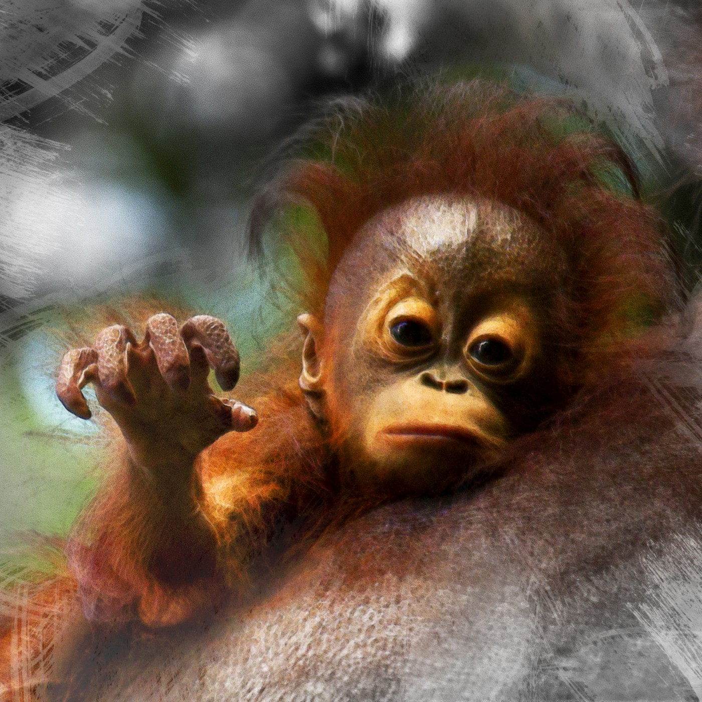 Misha Masek, </span><span><em>Critically endangered orangutan</em>, </span><span>2015