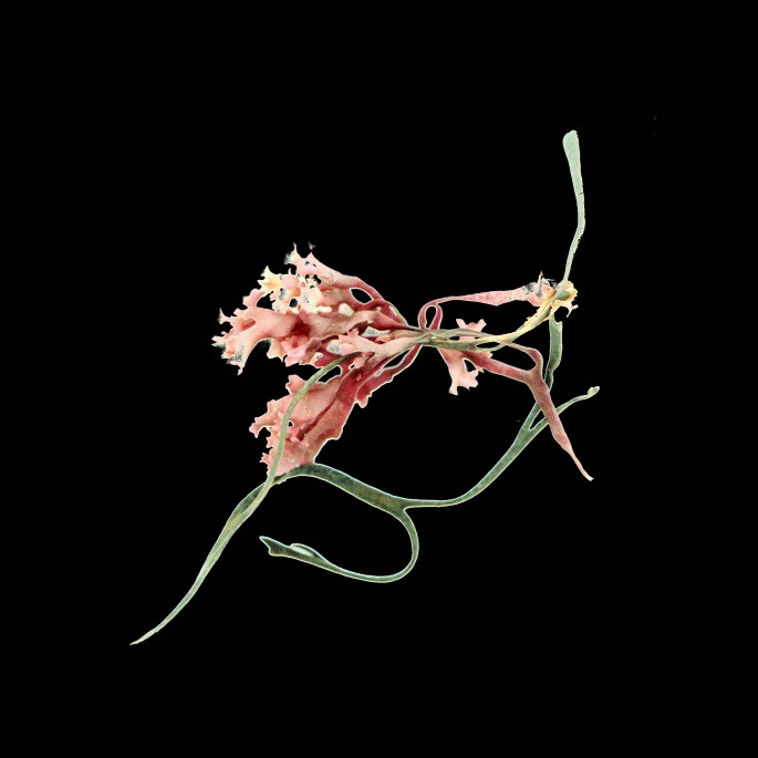 Linda Briskin, </span><span><em>aqua botanica (iv)</em>, </span><span>2016