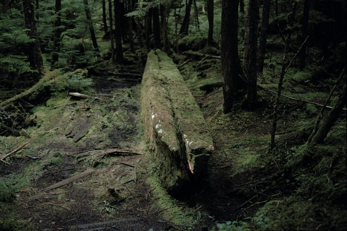 Johan Hallberg-Campbell, </span><span><em>Haida Gwaii, British Columbia (War canoe sits unfinished in the forest where it fell. Dated 1860s)</em>, </span><span>2014. Courtesy of the artist.